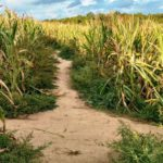 kukuřičná hájvej
